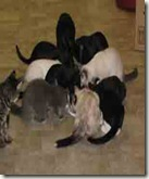 catsfeeding