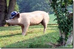 yard pig