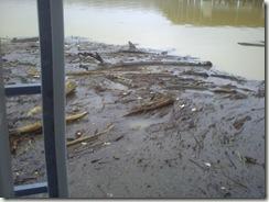 the flood 008