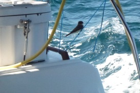 Stowaway 25 Miles Out